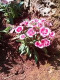 Comida fría de la flor Fotografía de archivo libre de regalías