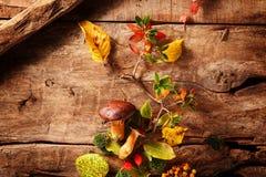 Comida fresca de un bosque del otoño Fotografía de archivo libre de regalías