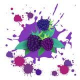 Comida natural de Logo Watercolor Splash Design Fresh de la fruta de Blackberry Imagen de archivo