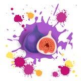 Comida natural de Logo Watercolor Splash Design Fresh de la fruta del higo Imágenes de archivo libres de regalías