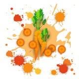 Comida natural vegetal de Logo Watercolor Splash Design Fresh de la zanahoria Fotografía de archivo