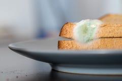 Comida putrefacta: Rebanadas mohosas de la tostada en una placa imagen de archivo libre de regalías
