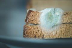Comida putrefacta: Rebanadas mohosas de la tostada en una placa imágenes de archivo libres de regalías