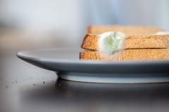 Comida putrefacta: Rebanadas mohosas de la tostada en una placa fotografía de archivo libre de regalías