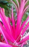 Comida rosada fotos de archivo