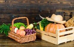Comida sana para el ?xito cesta con la fruta y verdura ?til cosecha rica del oto?o vitamina estacional Org?nico y foto de archivo