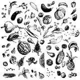 Comida, verduras y frutas dibujadas mano del garabato Objetos negros, fondo blanco Illusrtration del diseño para el cartel, aviad Fotografía de archivo