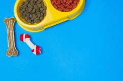 Comida y accesorios de perro en la opinión superior del fondo azul Imagen de archivo