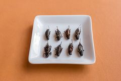 Comidas del insecto en magdalenas del pl?tano imagenes de archivo