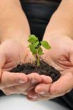 Comience nueva vida, manos que sostienen el árbol joven Foto de archivo