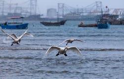 Comience a volar cisnes mientras que nieva Foto de archivo