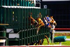 Comienzo de la carrera de caballos imágenes de archivo libres de regalías