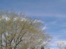 Comienzo de la primavera Foto de archivo