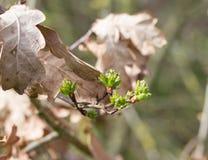 Comienzo de la primavera imagenes de archivo
