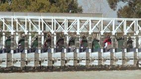 comienzo de una carrera de caballos de los arrancadores almacen de video