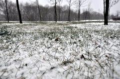 Comienzo del invierno fotos de archivo