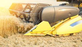 Comine harvester working in barley field Royalty Free Stock Photo