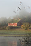 Coming Home. Geese flying over barn in the fog with morning sun Royalty Free Stock Photos