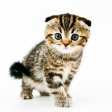 Coming kitten. Little kitten come to me royalty free stock photos
