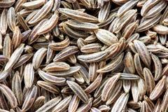 Comino - alcaravea - macro del germen Imagen de archivo libre de regalías