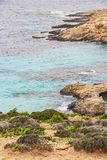 Comino coastline with island vegetation, limestone rocks and the Blue Lagoon water, Comino island, Malta. Comino coastline with island vegetation, limestone Stock Image