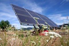 Comitato solare e fiore Immagini Stock