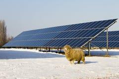 Comitato solare e pecore Immagini Stock Libere da Diritti