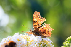 The Comma backlit Royalty Free Stock Images