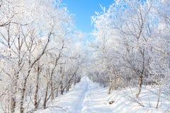 Commande d'hiver par le paysage volcanique Images libres de droits