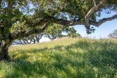 Commande de forêt en bois de Muir par nature près de San Francisco Image libre de droits