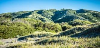 Commande de forêt en bois de Muir par nature près de San Francisco Photo stock