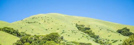 Commande de forêt en bois de Muir par nature près de San Francisco Images stock