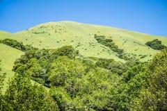 Commande de forêt en bois de Muir par nature près de San Francisco Images libres de droits