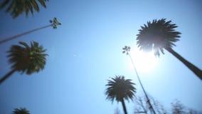 Commande de palmier clips vidéos