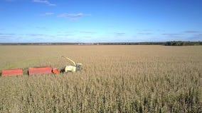 Commandes étroites de moissonneuse de maïs de vue sur le champ suivi du camion banque de vidéos