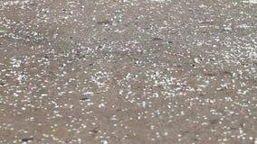 Commandes de vent sur les fleurs de cerise tombées par asphalte clips vidéos