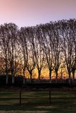 Comme soldats d'armée, les arbres sont alignés observant le coucher du soleil Photographie stock libre de droits