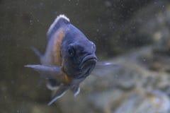 Comme un poisson Image libre de droits