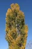 Commencer de couleurs d'automne Images stock