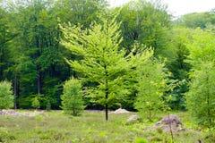 Commencez la forêt d'automne Photo stock