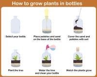 Comment cultiver des usines dans des bouteilles illustration libre de droits