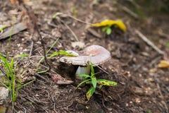 Comment fait un champignon développez-vous au sol avec l'herbe photographie stock