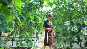 Commerciële tuinman die de bloemen water geven stock footage
