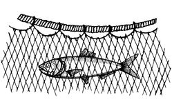 Commercial fish caught in the network. Vector illustration hand drawing. Object Stock Image
