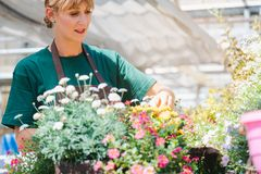 Commercial gardener woman taking care of her potted flowers. And plants stock photography