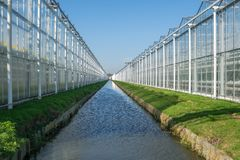 Perspective view of industrial glass greenhouses in the Netehrla stock photo