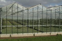 Commercial greenhouse royalty free stock photo