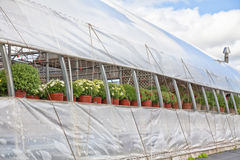 Commercial Greenhouse Stock Images
