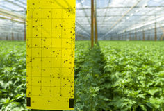 Commercial greenhouse Stock Photos