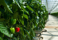 Commercial greenhouse Royalty Free Stock Image